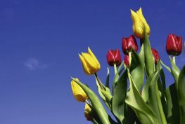 Frühlingsfest der Senioren